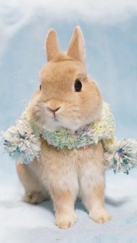兔子 宠物 动物 装饰