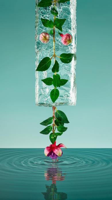 鲜花 冰块 唯美 水 枝叶