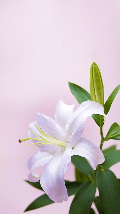 鲜花 花蕊  植物 花朵
