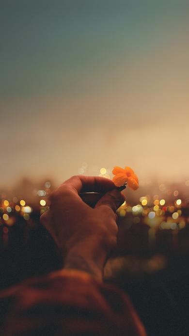 小花 花朵 手 黑夜 城市