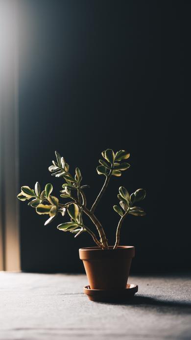 盆栽 枝叶 绿化 阳光