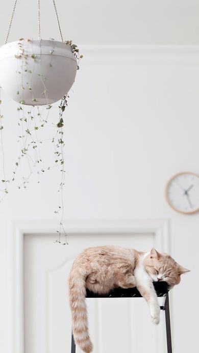 猫咪 昏睡 动物 吊篮