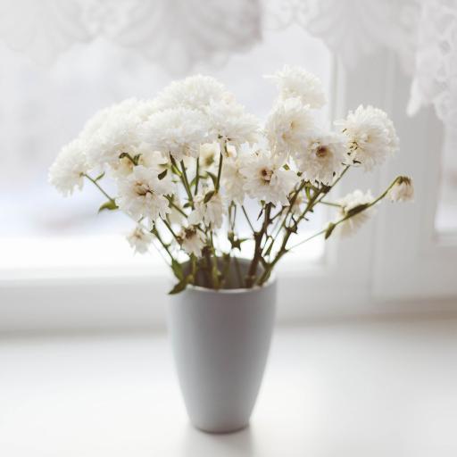 窗台 花瓶 鲜花 白雏菊