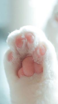 猫爪子 粉嫩 萌萌哒