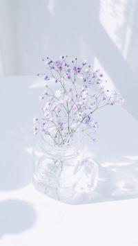 满天星 白色 插花 唯美 小清新