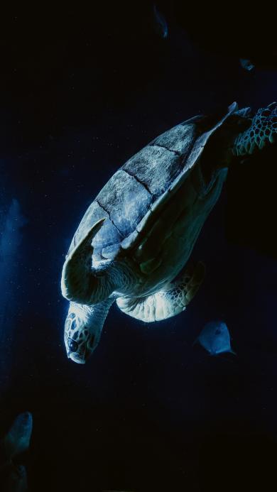 海洋生物 海鱼 海龟 自由
