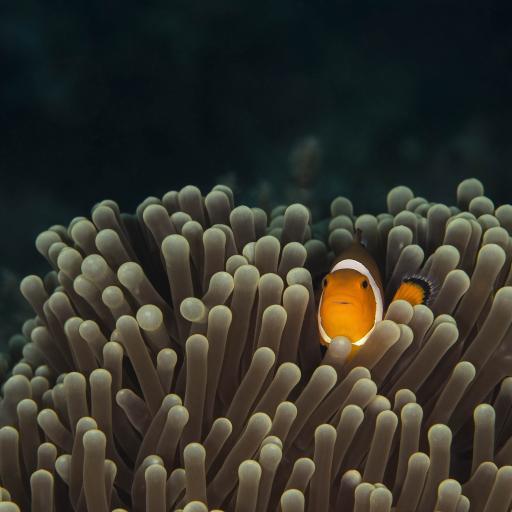 海洋生物 珊瑚群 小丑鱼
