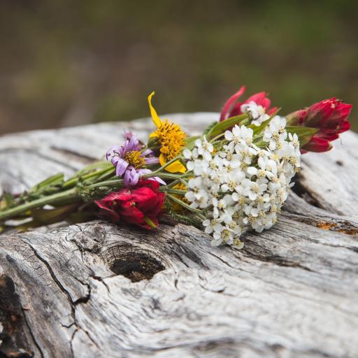 鲜花 色彩 木材 纹路