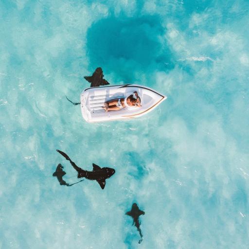 天蓝色海绵 橡皮艇 鲨鱼 海洋生物