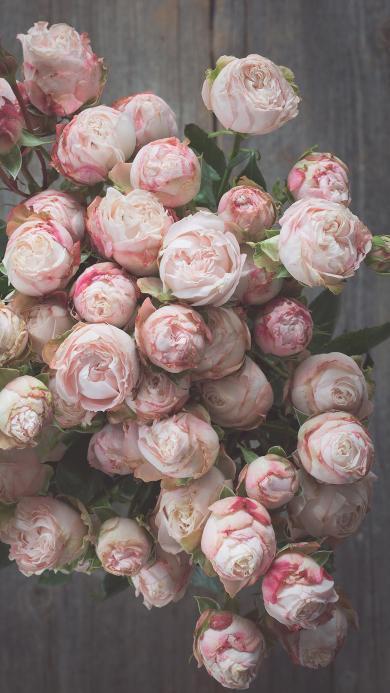 玫瑰 鲜花 浪漫 花束 唯美