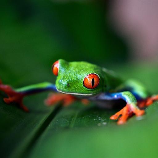 树蛙 青蛙 绿色 两栖 树叶