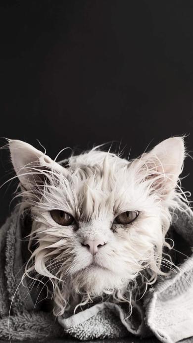 猫咪 湿润 宠物 皮毛