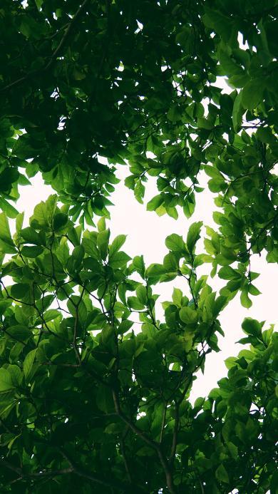树叶 绿色 枝叶 树木