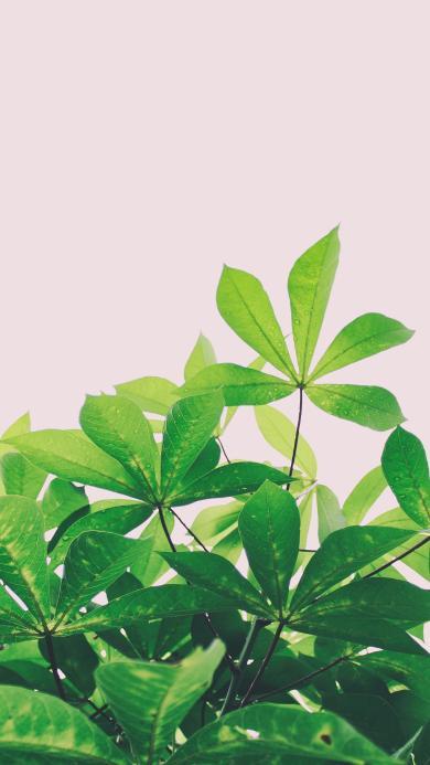 綠葉 健康護眼 露珠
