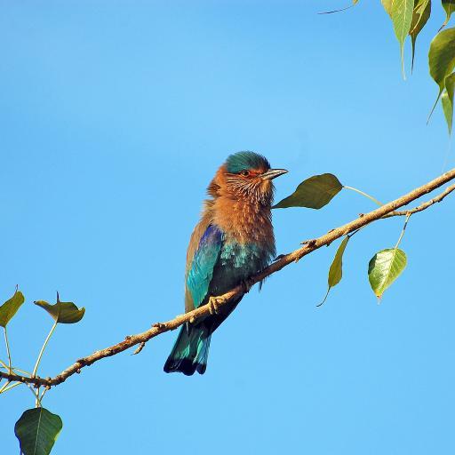 蓝天 树枝 栖息的小鸟 蓝黄色羽毛
