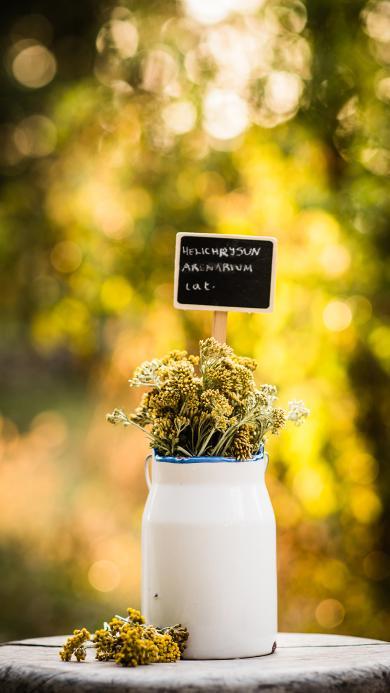 白色玻璃花瓶 黄色干花 小清新