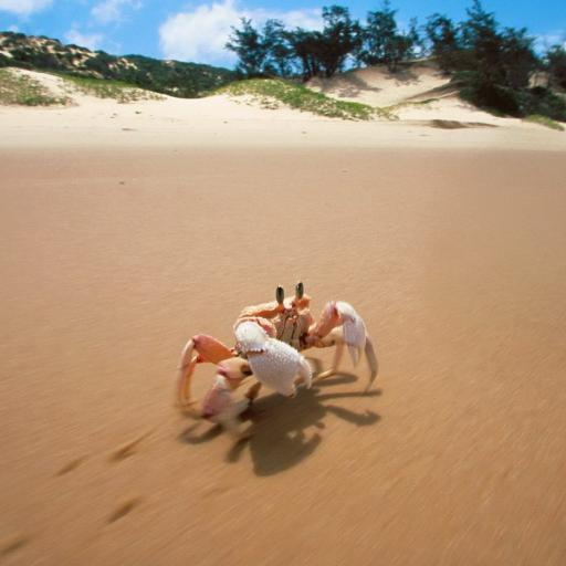 螃蟹 沙滩 脚印 爬行