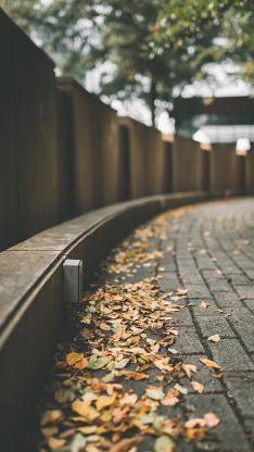 落叶 街道 秋意 枯黄