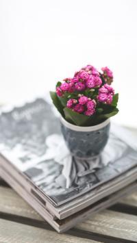 盆栽 小花 书本 种植