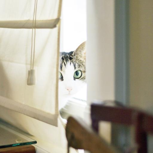 猫咪 可爱 萌 宠物 喵星人