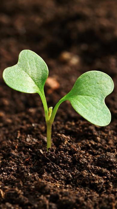 发芽 小苗 茁壮成长