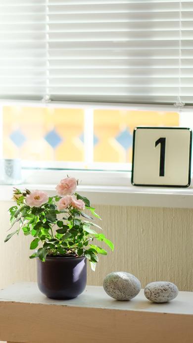 花瓶 窗臺 擺飾
