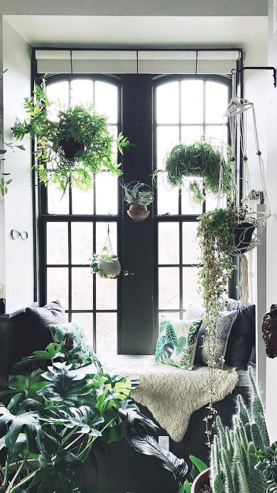 创意 盆栽 吊篮 飘窗