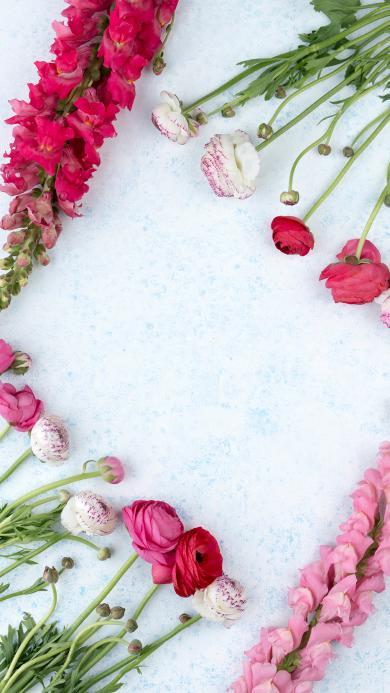 鲜花 花朵 花苞 花簇