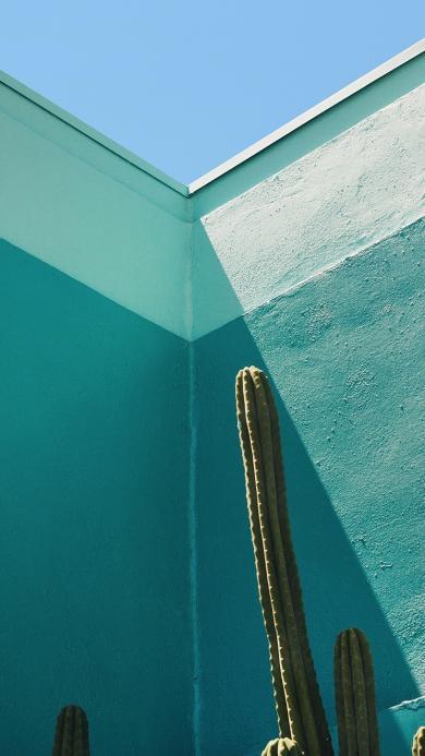 藍色墻壁 仙人掌 防輻射