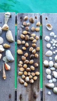 海水 木板 贝壳 装饰品