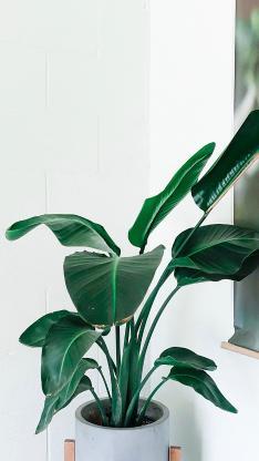 室内绿植 盆栽 护眼 壁画