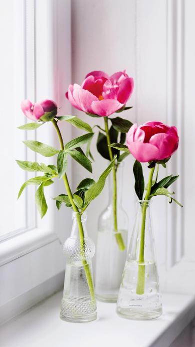插花 鲜花 枝叶 玻璃瓶 花艺 唯美