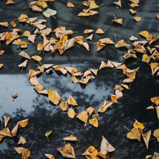 落叶 枯黄 平铺 心形