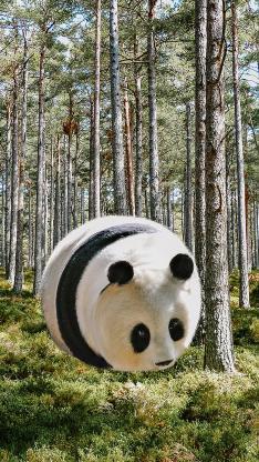 熊猫 飞 秋 肥胖 森林