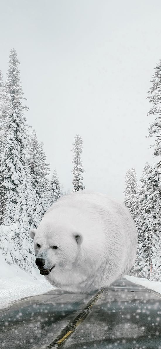 北极熊 圆 球 肥胖 雪 冬天