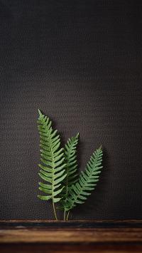 蕨类 枝叶 羊齿植物