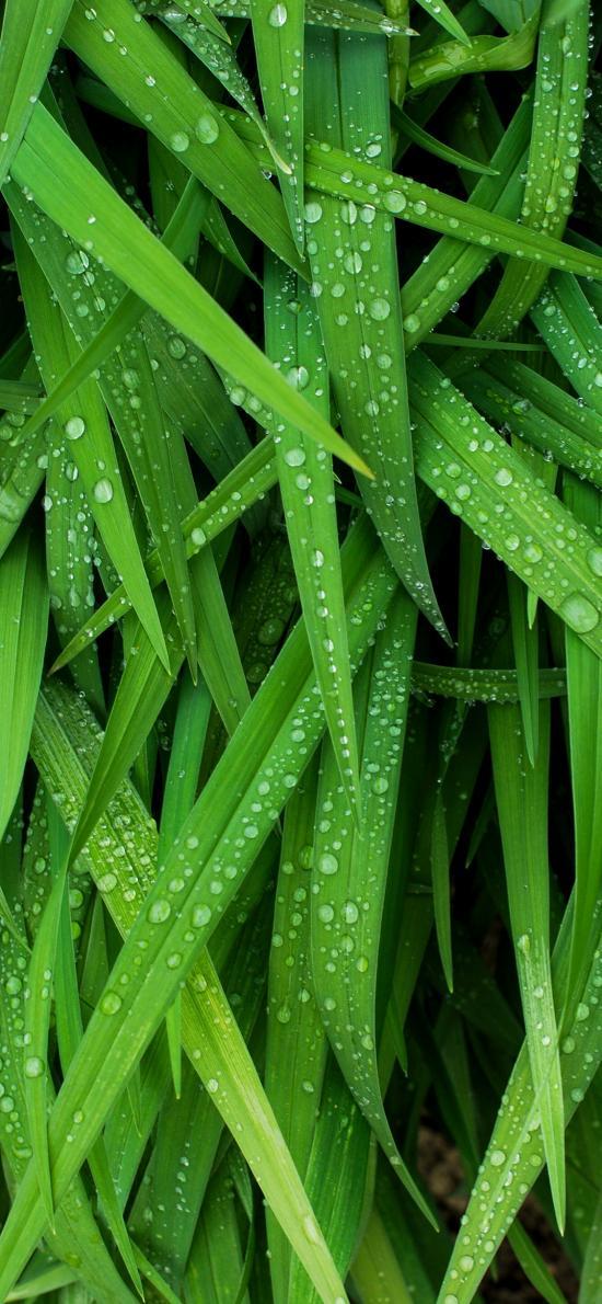草 绿色 护眼 露水