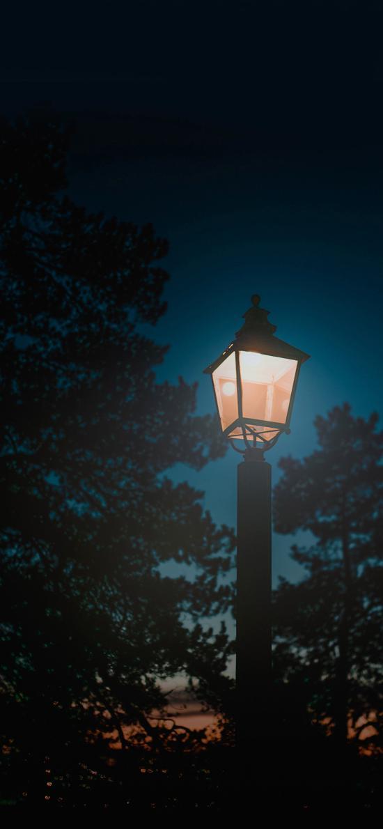 路灯 树木 路边 夜晚 天空