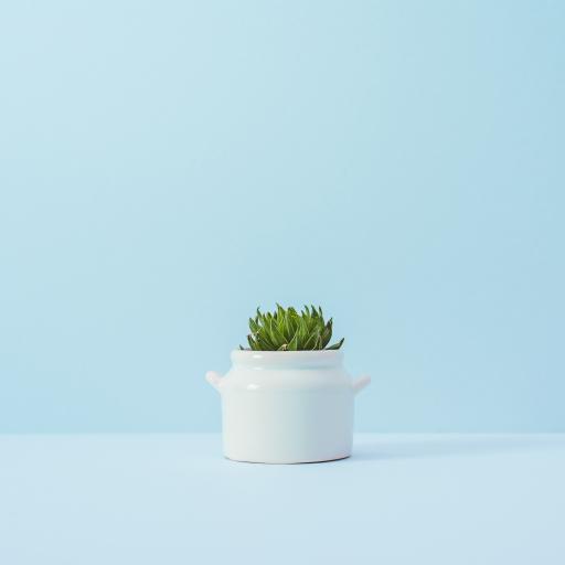 盆栽 植物 小清新 简约