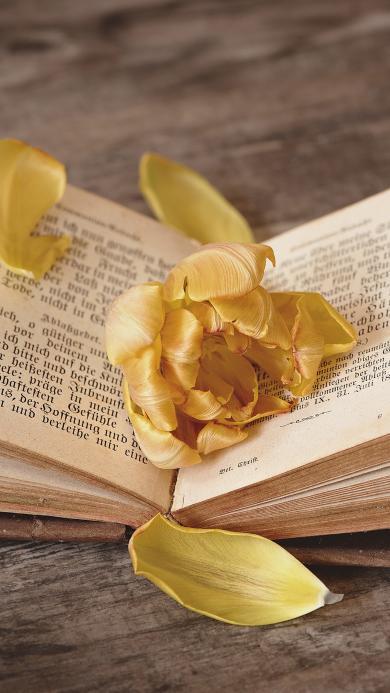 书籍 阅读 鲜花 花瓣
