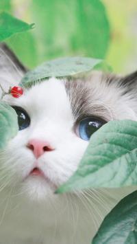 猫咪 喵星人 树叶 可爱 宠物