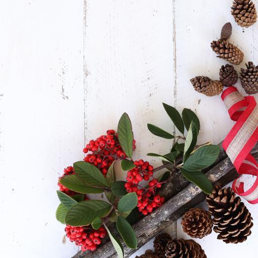 松果 果实 浆果 枝叶 圣诞装饰