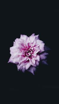 花瓣 盛开 特写 鲜花