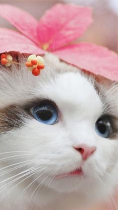 猫咪 可爱 喵星人 宠物 萌