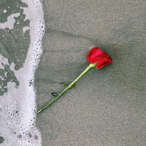 玫瑰 花朵 海浪 沙滩