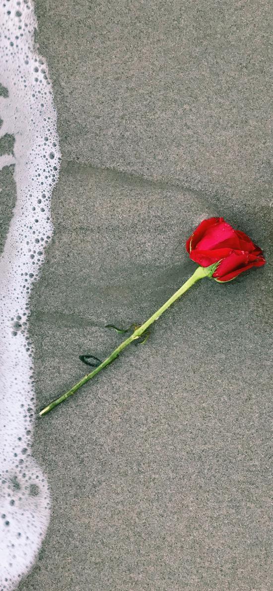 玫瑰 花朵 海浪 沙灘