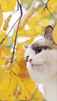 猫咪 喵星人 可爱 宠物 秋天 季节 枯叶