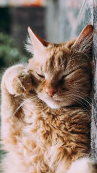 可爱 猫咪 宠物 眯眼