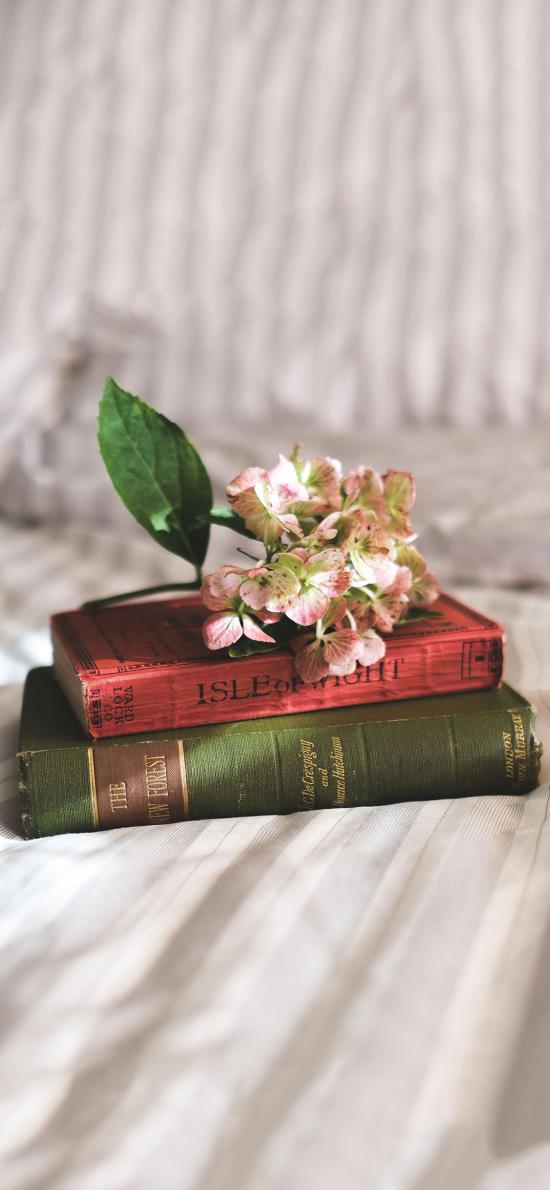 条纹被单 书本 鲜花 静物