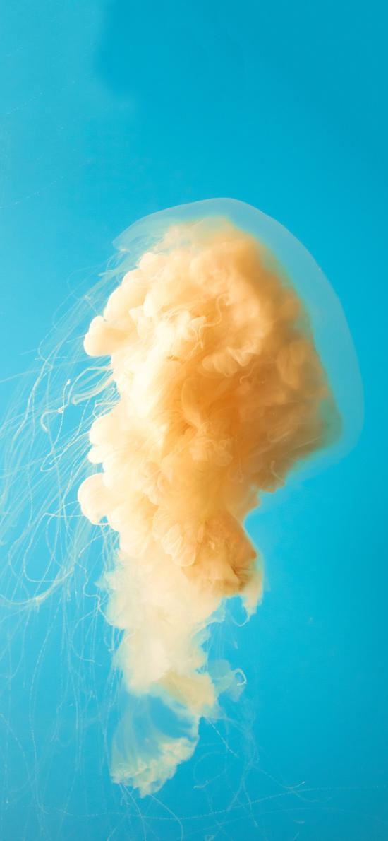 藍色背景 水母 黃色 海洋生物